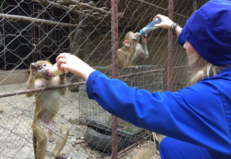 sanctuary volunteer feeding monkeys