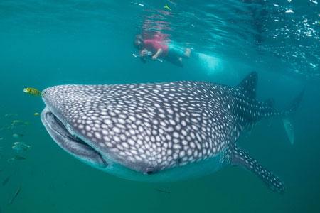 Marine Conservation Programme