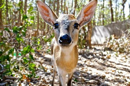 Wildlife Sanctuary Programme Malawi