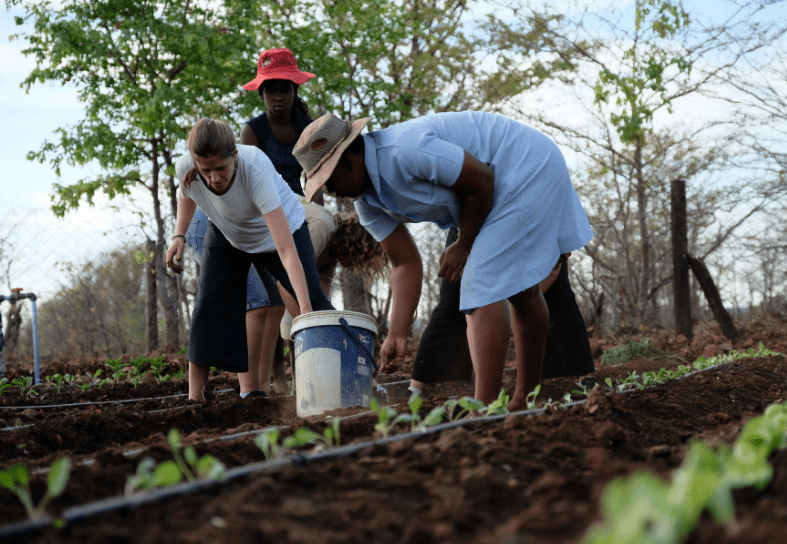 Volunteers and community helping weed vegetable garden