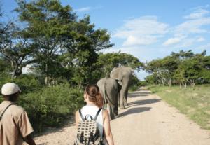 Volunteer with elephants in Zimbabwe