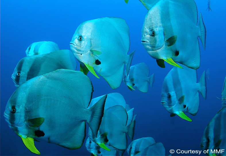 marine-conservation-fishes