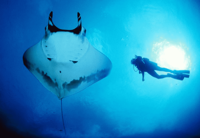marine-conservation-manta-closeup