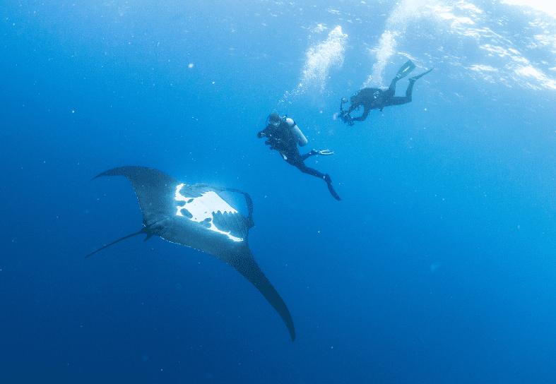 marine-conservation-manta-volunteer