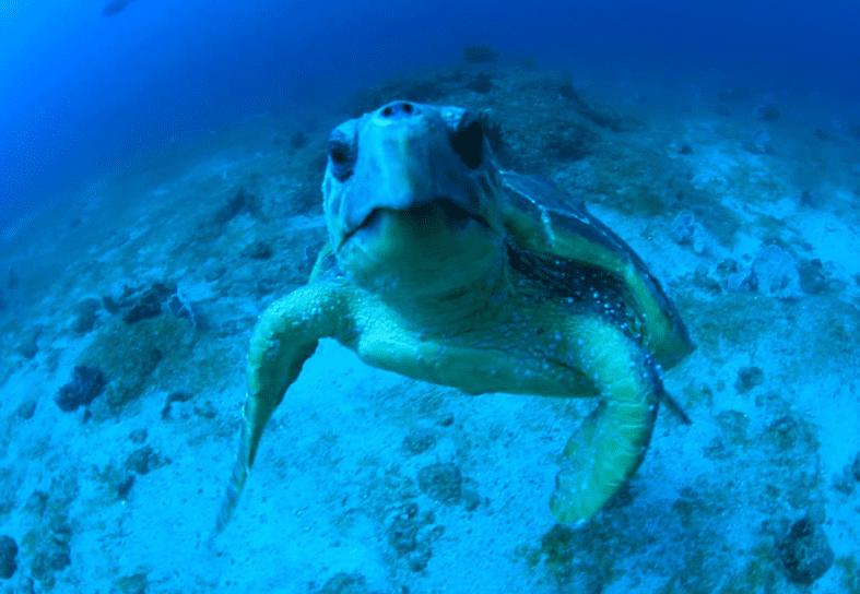 marine-conservation-turtle-moz