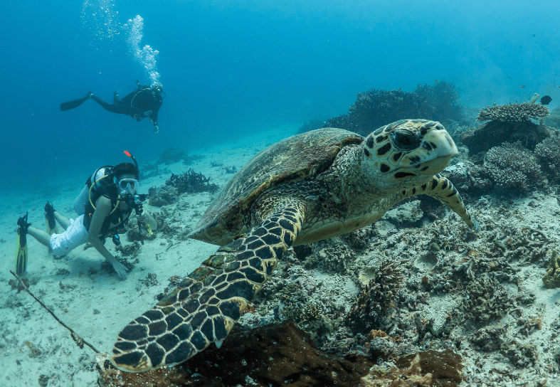 marine-conservation-turtle-research