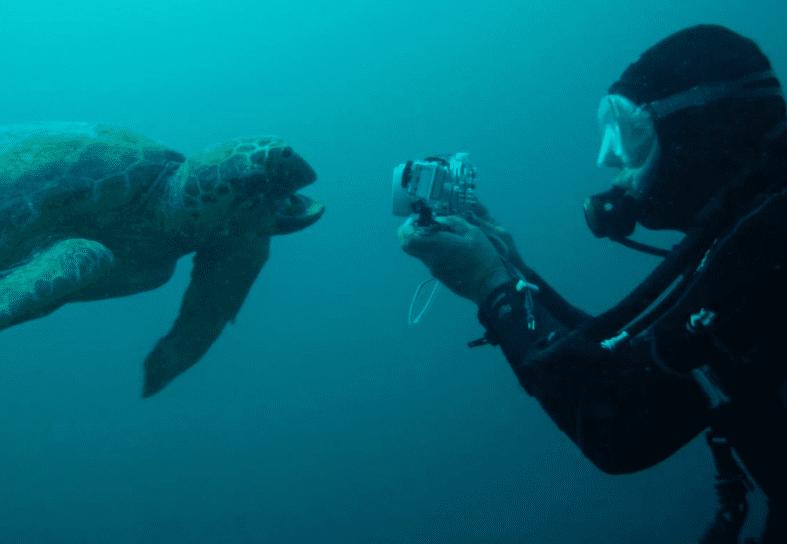 marine-conservation-turtle-volunteer