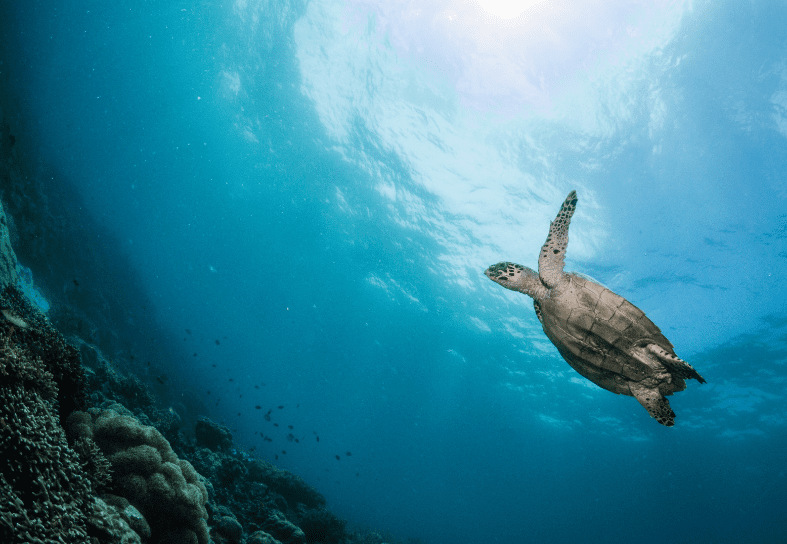 marine-conservation-turtle