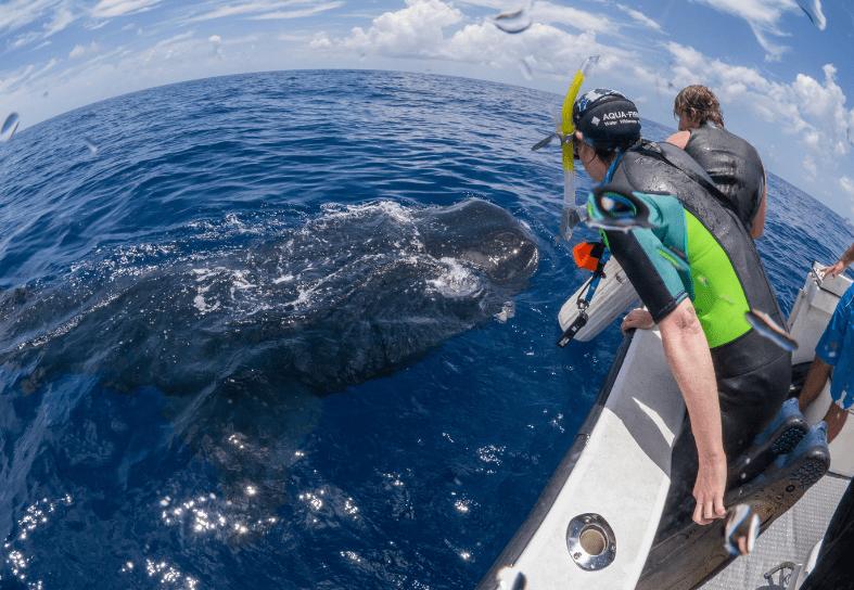 marine-conservation-whale-volunteer