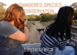 volunteer with endangered species