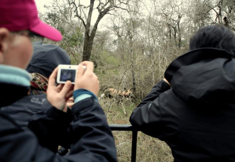 Volunteers taking photos of wild dogs