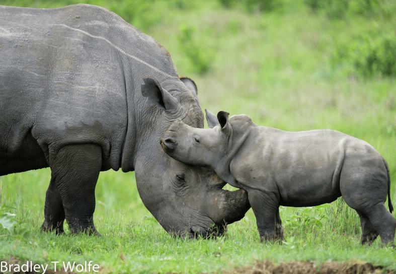 family-volunteering-baby-rhino-mum