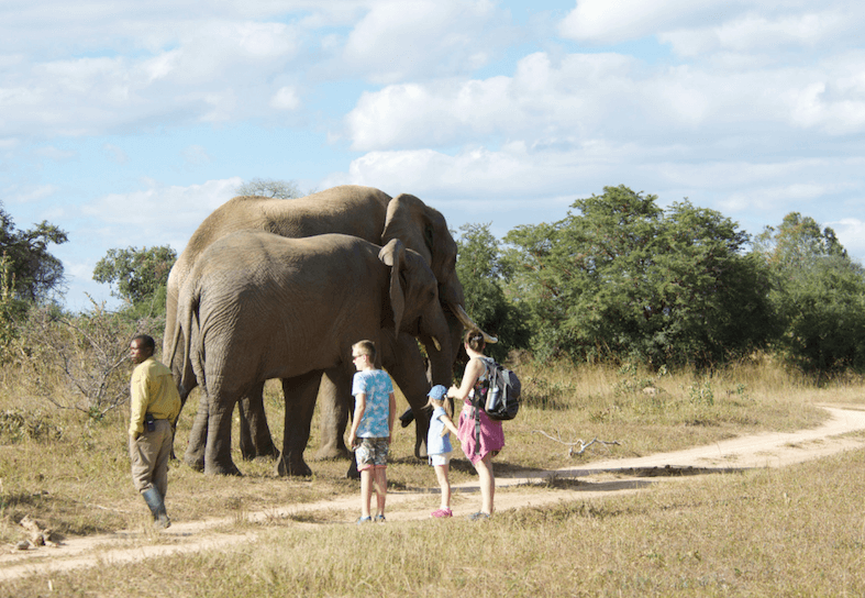 family volunteers with elephants
