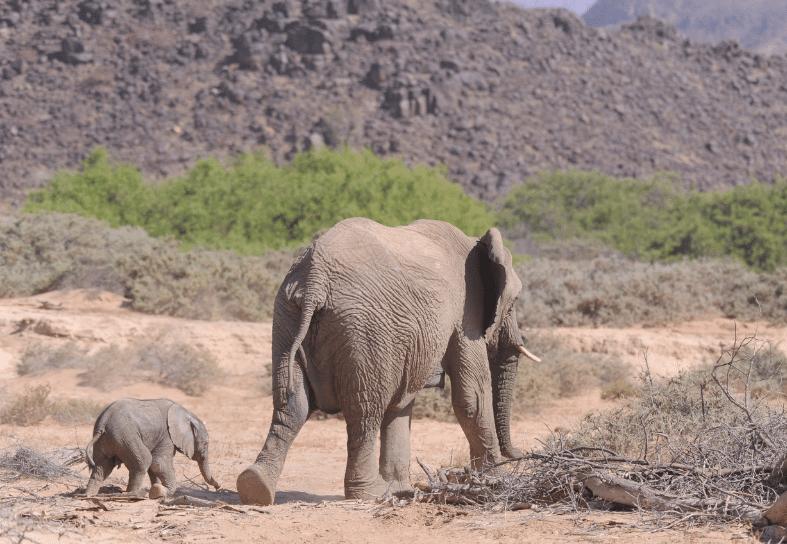 Family-volunteering-desert-elephant-conservation