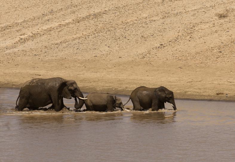 Family-volunteering-desert-elephant