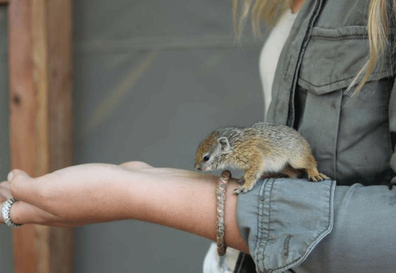 Family-volunteering-squirrel