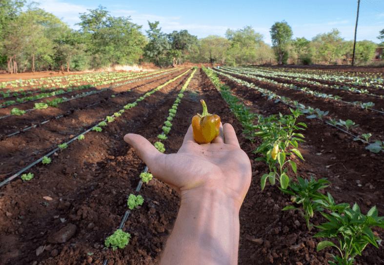 volunteers-pepper