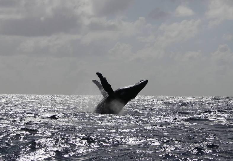 humpback whale 2018