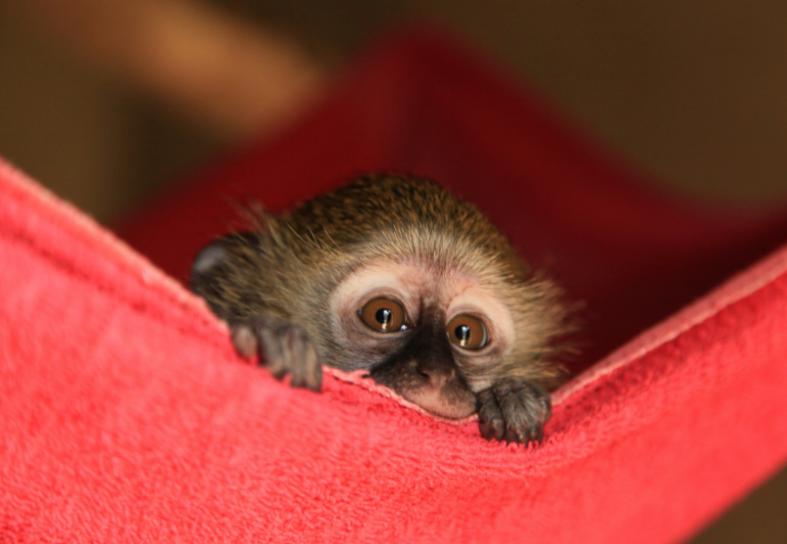 monkey-rehabilitation