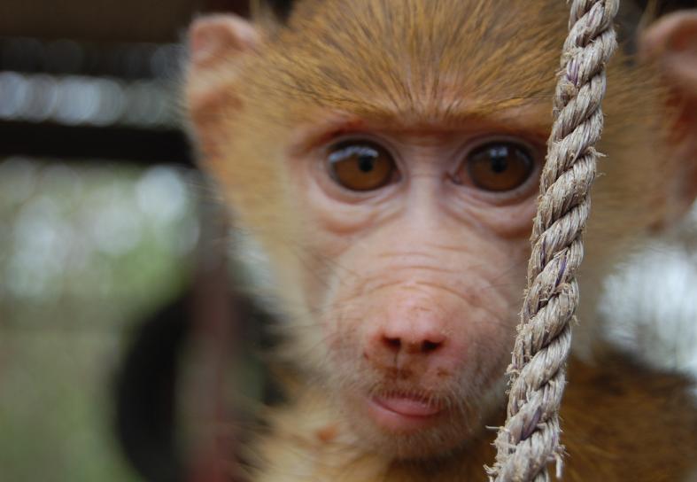 monkey-sanctuary-malawi