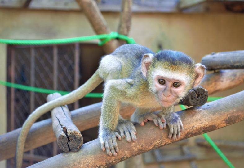primate-enrichment