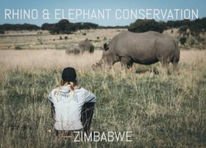 rhino and elephant volunteer programme