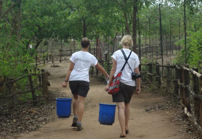 sanctuary volunteers carrying food