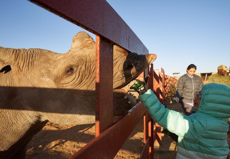 Family volunteering - rhino