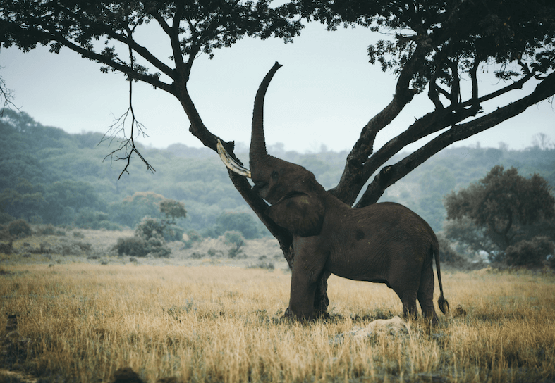 family-volunteers-elephant-browsing