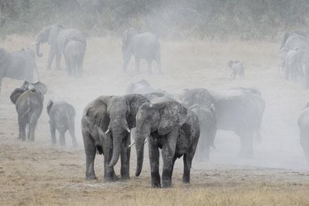 Big-5-Conservation-Programme-Zimbabwe