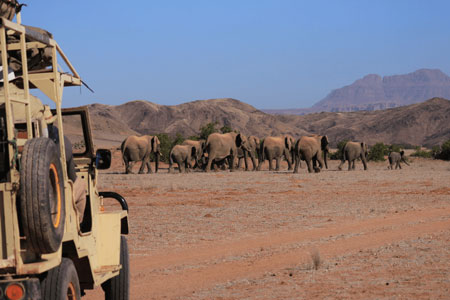 Elephant Conservation and Community Outreach Programme