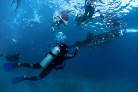 Family Volunteering - Marine Conservation
