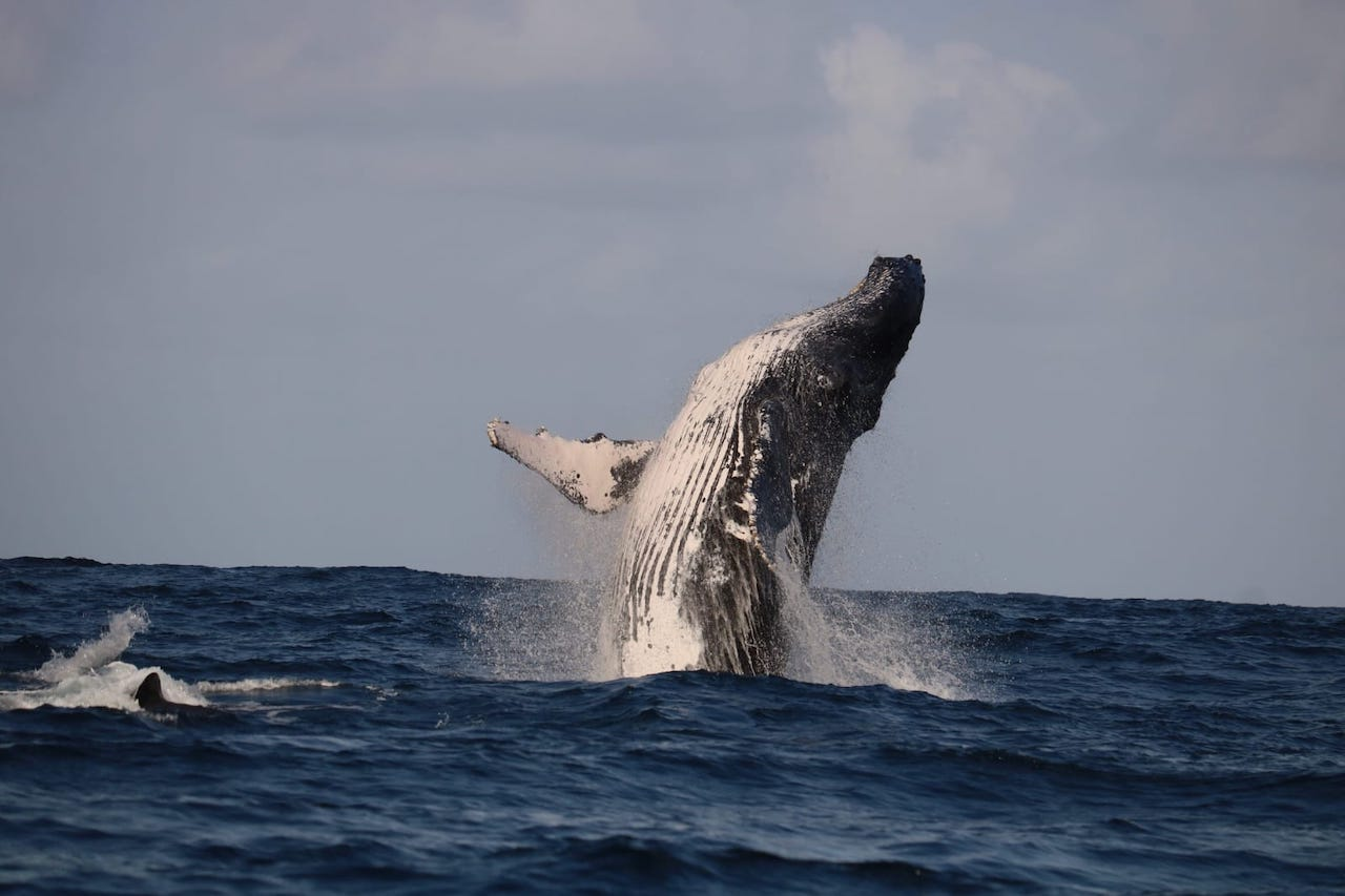 Humpback Whale Research blog