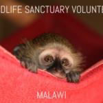 malawi-wildlife-sanctuary