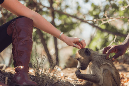 Wildlife Conservation and Animal Sanctuary Experience for Under 18s