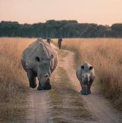 Our projects - rhino conservation