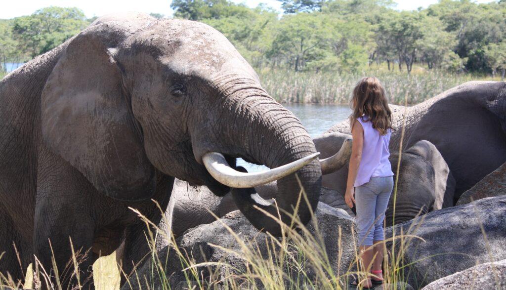 child volunteering with elephants