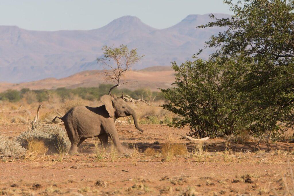 baby elephant in Namibia