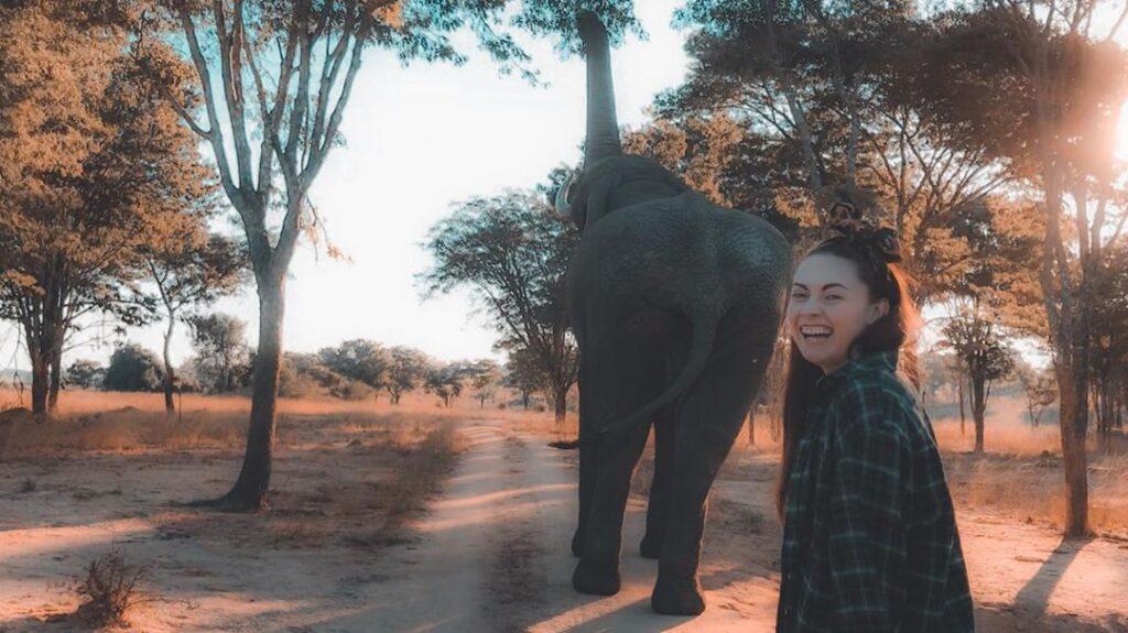 Volunteer with elephant in Zimbabwe