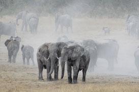 Big 5 Wildlife Conservation Programme