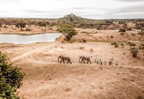 Volunteers in Zimbabwe walking behind African elephants
