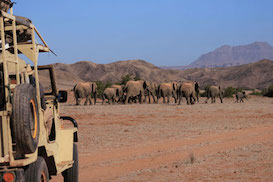 Elephant Conservation in Namibia
