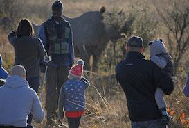 Family volunteering - rhino and elephant programme