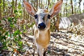 Malawi Wildlife Sanctuary Programme