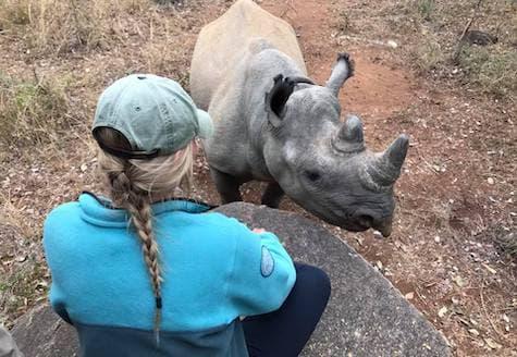 Volunteer on rhino conservation project in Zimbabwe watching black rhino very close