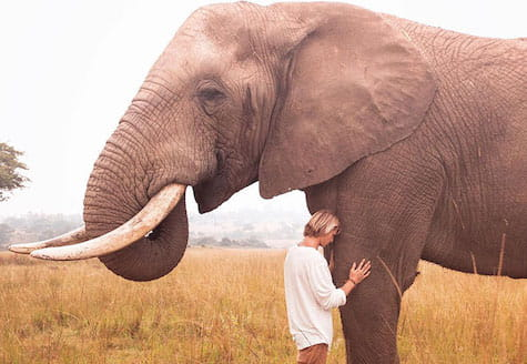Man standing close to African elephant