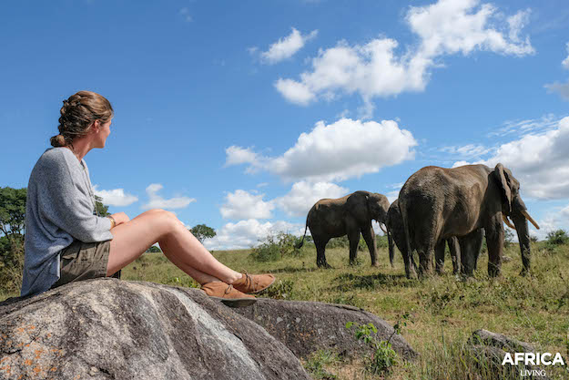 Volunteer with three elephants