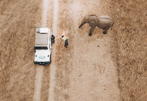 Volunteers in a car next to an African elephant