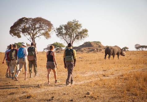Group of volunteers in Zimbabwe walking behind three black rhino