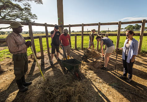 Volunteers in the game park mucking out elephant beds